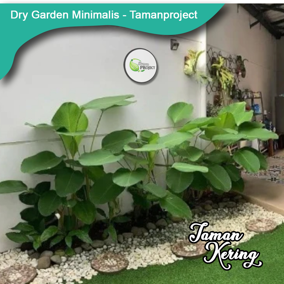Tukang Taman - Paket Jasa Pembuatan Taman Kering Minimalis Belakang Rumah | Max 5 Meter Persegi